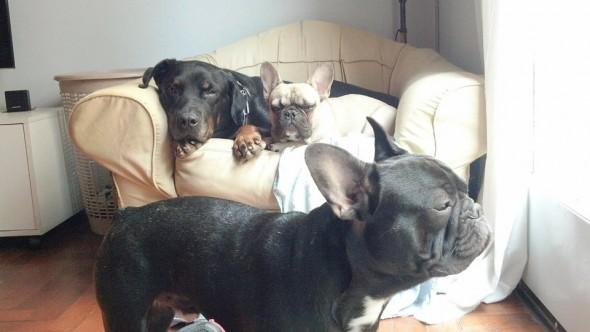 Tayron with his siblings Ayken and Afro. Photo credit: Bucamos a Tayron/Facebook