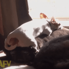 Lazy Dog Finds Best Comfortable Bed to Nap On