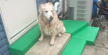 "Pet Owner Builds Senior Dog ""One of a Kind"" Stairs"