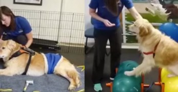 Rocky Gets His Mobility Back Thanks to HydroPaws