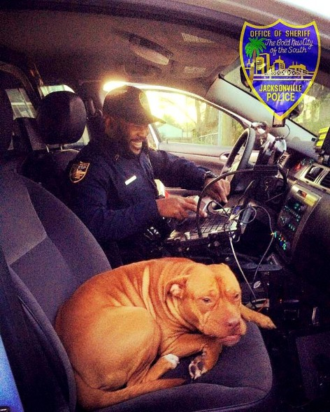 2.10.16 - Runaway Pit Bull Christens Rookie Cop's New Cruiser1