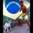 Dog Shake-Shake-Shake, Shake-Shake-Shake, Shakes His Booty