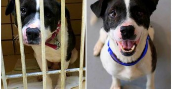 The Day a Terrified Shelter Dog Found His Smile