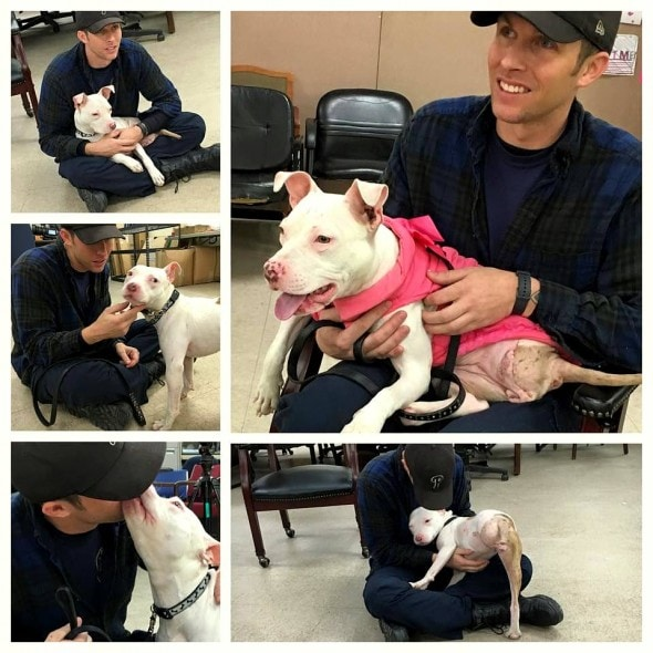 2.11.16 - Dog Run Over by Train Adopted by Officer Who Saved Her2