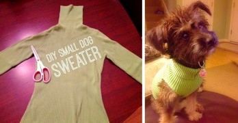 Turn One Old Sweater into Three Sweaters for Shelter Dogs