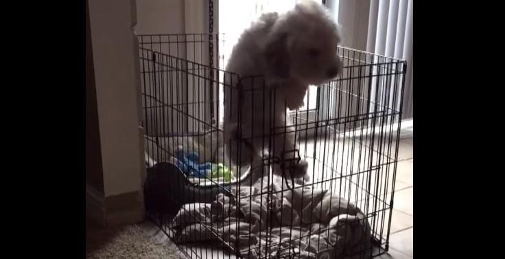 Adorable Little Escape Artist