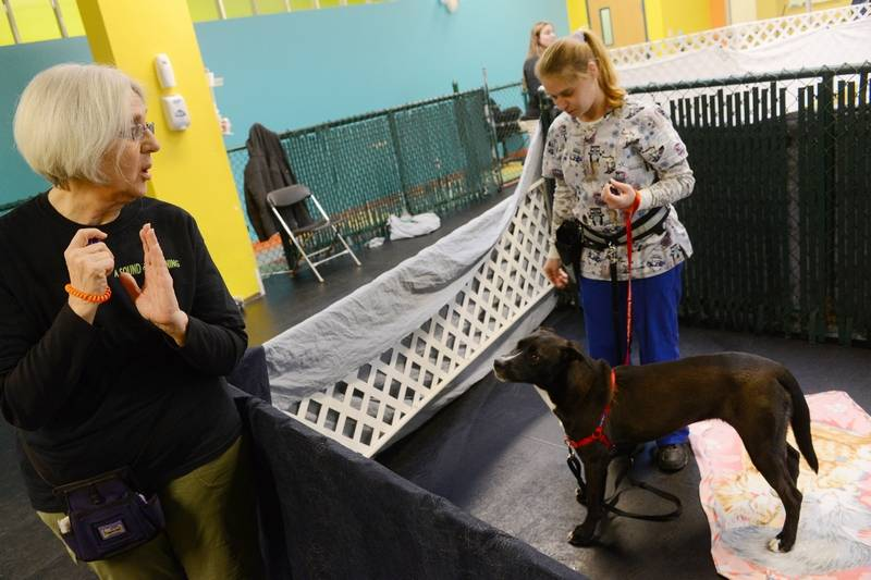 Woman Creates Music Program to Calm Anxious Shelter Dogs