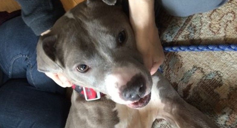 Abandoned Dual-Sex Dog Adopted by Gay Rights Attorney