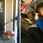 From Starving & Surviving on Trash to Treasured Family Member