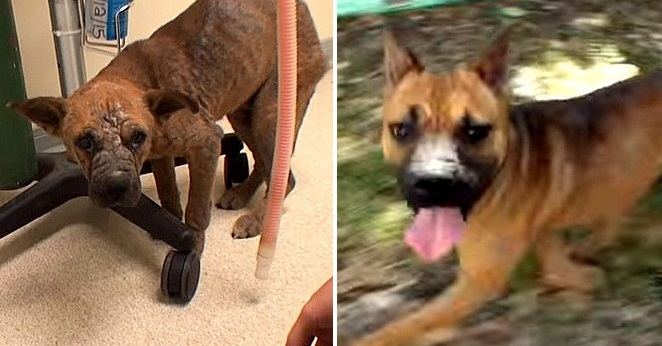 Starving, Blind, Mangy, Puppy Completely Recovers
