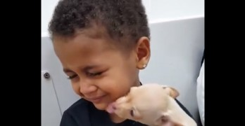 Little Boy Has the Cutest Reaction to Holding Chihuahua