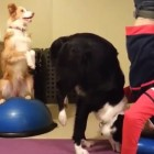 Proof That Yoga Is Better With Dogs
