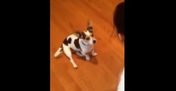 Woman Teaches Dog to Meow Like a Cat