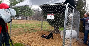 "Volunteers Build Free Kennels to ""Break the Chain"" on Tethering"