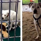 Dog Abandoned with Teddy Bear Finally Gets Adopted