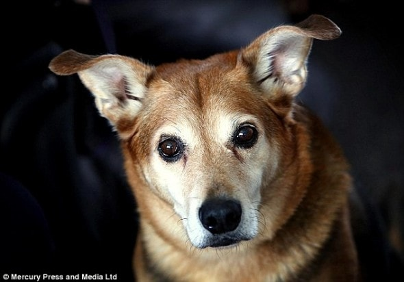2.25.16 - Dog Has Cried Every Night for Six Months Since Mom Died5