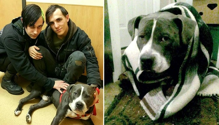 Community Rallies & Saves Injured Dog Abandoned in the Freezing Cold