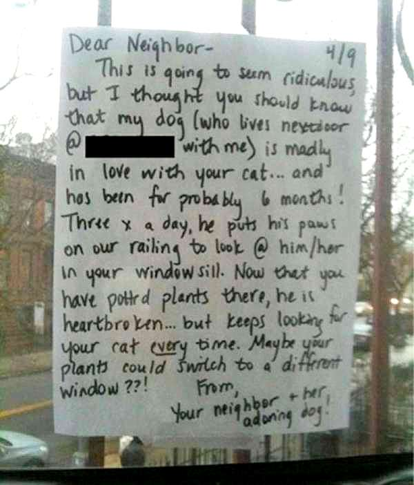 dog letter to owner writes letter to cat amp gets the best 21394