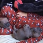 Baby Sleeps with Pug Puppies