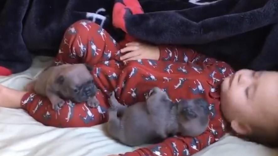 Baby Sleeps with Pug Puppies