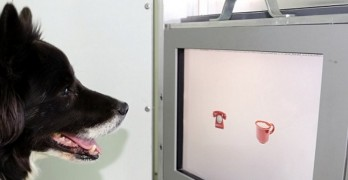 Study Shows Old Dogs CAN Learn New Tricks