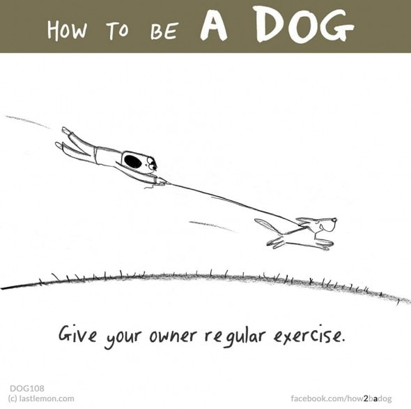 2.4.16 - How to Be a Dog10