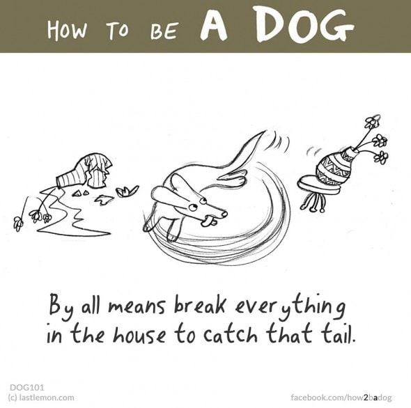 2.4.16 - How to Be a Dog15