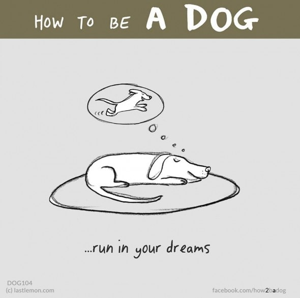 2.4.16 - How to Be a Dog18