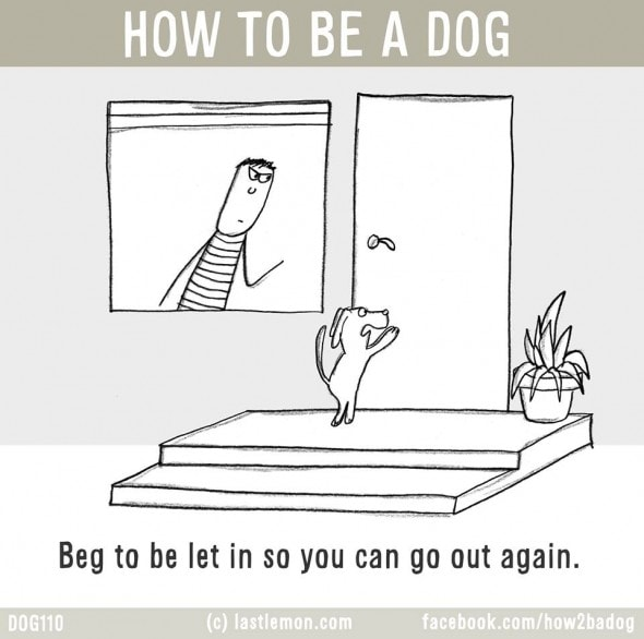 2.4.16 - How to Be a Dog9