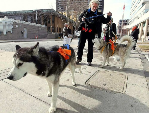 Dean Cresswell outside the courthouse with Phoenix and Bandit.