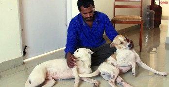 Man Saves Money for 10 Years to Buy a Stray Dog Ambulance