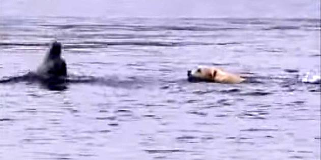 Dog and Dolphin Best Friends Swim Together Every Day