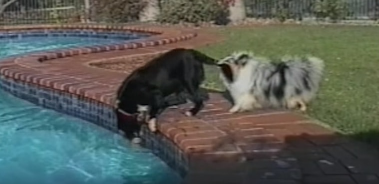 Animal Friends Helping Each Other Out