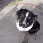 Dog With Two Noses Sniffs Out Things Better Than Anyone Else