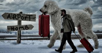 """Giant"" Dog Helps Photographer Smile Again"