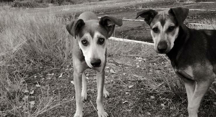 Stray Dogs Break Our Hearts With Written Messages