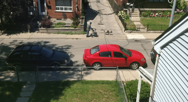 Faithful Dog Walks at the Same Pace as His Elderly Owner
