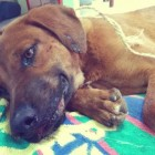 Dog Almost Beaten to Death Defies Odds and Survives