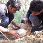 Dog Breathes Again After Rescuers Free His Head from Plastic Jar