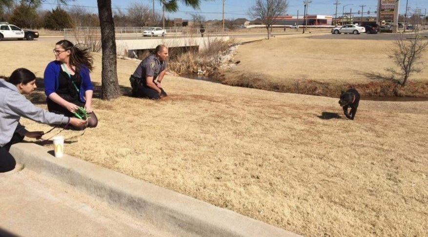 Officer Drops Everything to Soothe Scared, Pregnant Dog