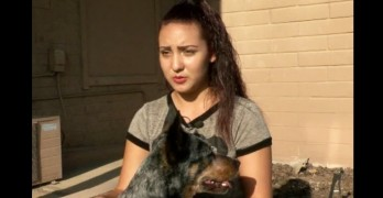 Dog Stops Man from Abducting Young Girl