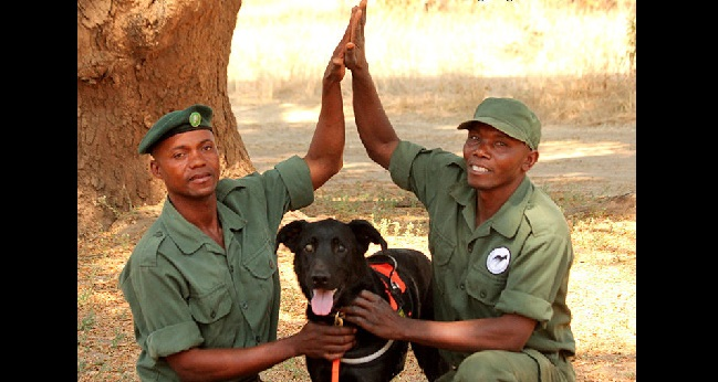 """""""Bad"""" Shelter Dog Has Put 150 African Elephant Poachers Out of Business"""