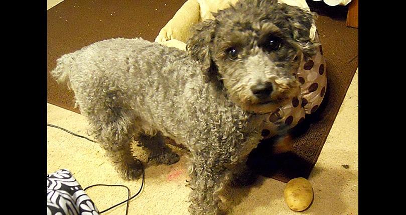 Dog Training Brantford