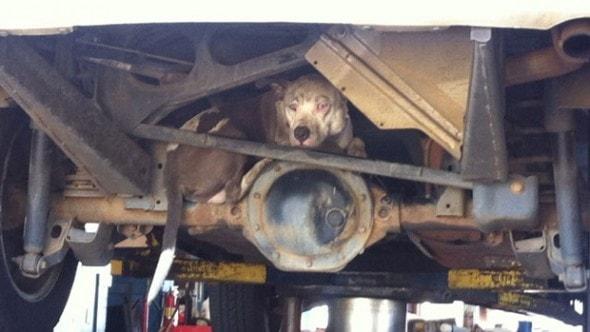 3.15.16 - car dog1