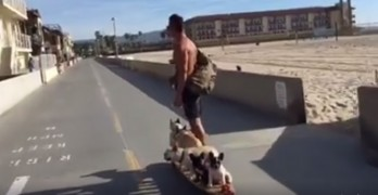 Six Frenchies on a Motorized Hamboard