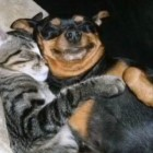 Cute Dogs and Their Kitty Best Buds