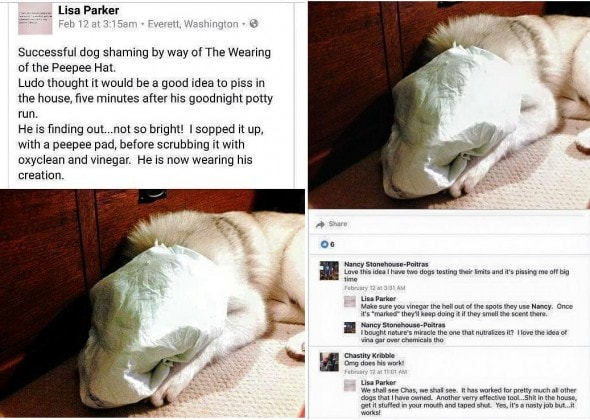 3.2.16 - Horrid Woman Who Taped Dog's Piddle Pad to His Face Being Investigated12