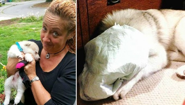 3.2.16 - Horrid Woman Who Taped Dog's Piddle Pad to His Face Being Investigated5