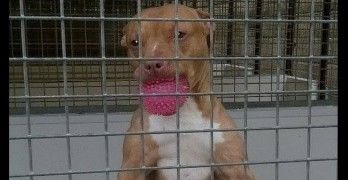"""UK Police Lock Up """"Dangerous"""" Dog for 2 Years Without Exercise"""