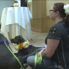 Detroit Dog Rescue Holds Dog Fashion Show
